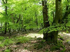 Staatswald