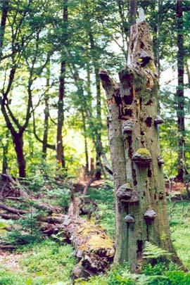 Weltnaturerbe Serrahn: Buchenurwald im Muritz-Nationalpark Weltnaturerbe Serrahn: Buchenurwald im Muritz-Nationalpark