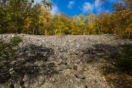 Blockschuttwälder – Stark bedrohtes Biotop und Lebensraum für seltene Pflanzen und Pilze
